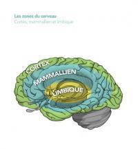 nos trois cerveaux, nos trois états du Moi, et l'influence du stress sur notre santé